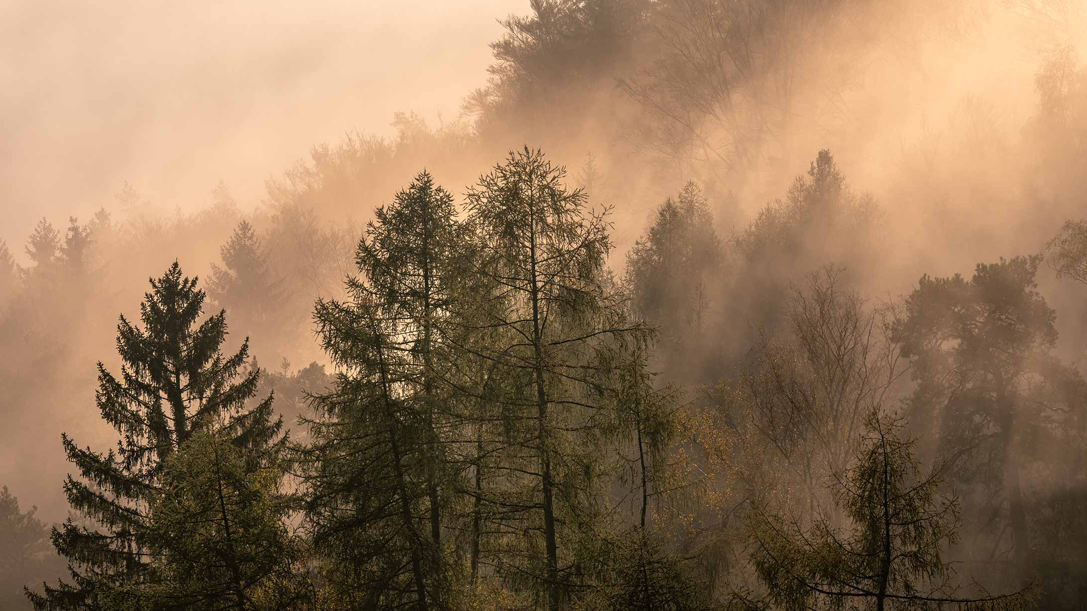 stimmungsbild, wald, nebel, thema netzdienstleistungen