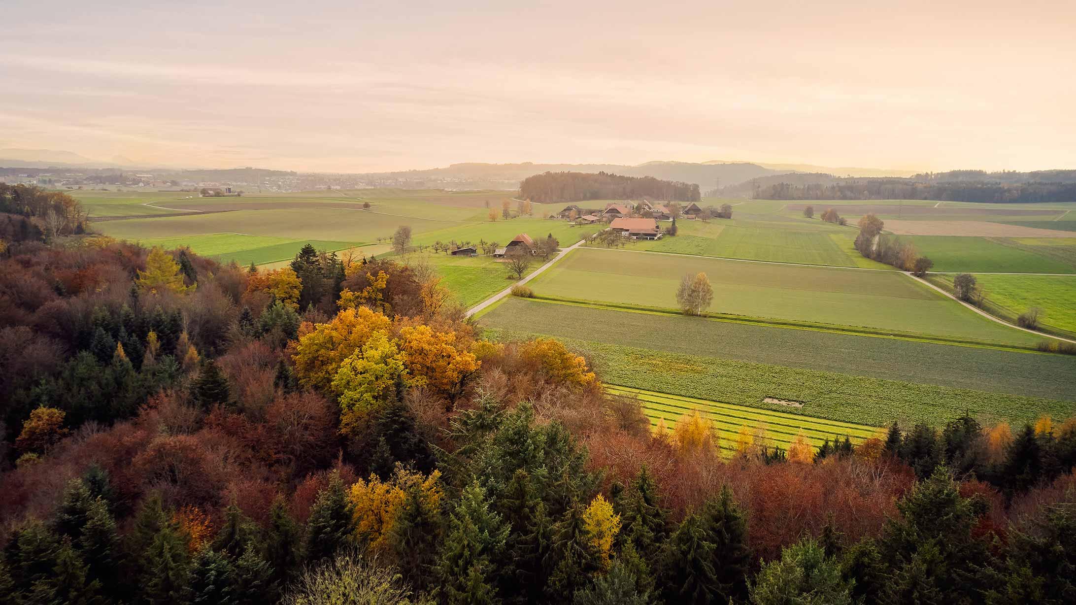 Landschaft mit Wald.